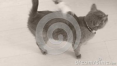 Rolo e gato do fiapo vídeos de arquivo
