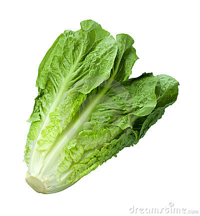 Free Romain Lettuce Isolated On White Stock Photos - 23856553