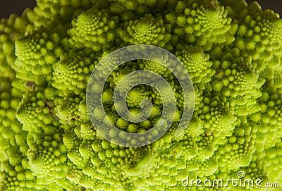 Roman cabbage