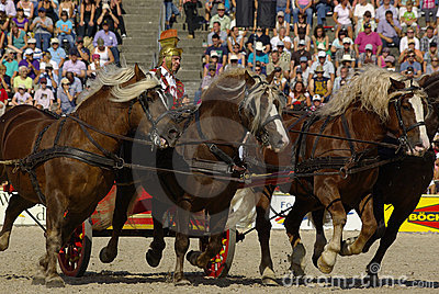Roman chariot racing, Marbach Stallion Parade Editorial Image
