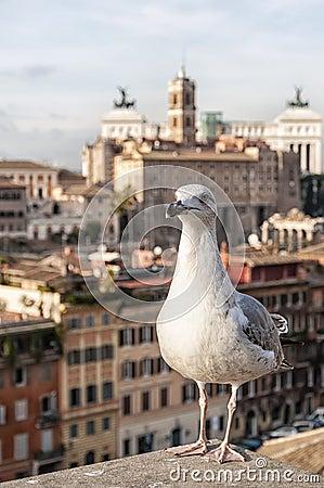 Free Roman Forum Seagull Stock Photos - 64818643