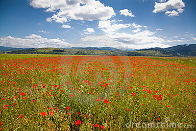 Romanian countryside with poppy field