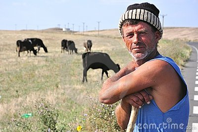 Romanian shepherd with cows Editorial Photo