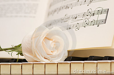 Romantic concept - white rose on piano keys