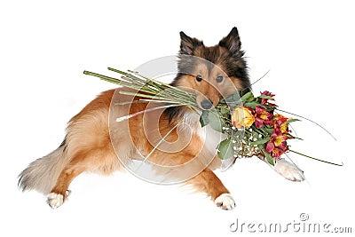 Romantic dog 7