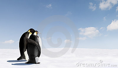 Romantic Emperor penguins