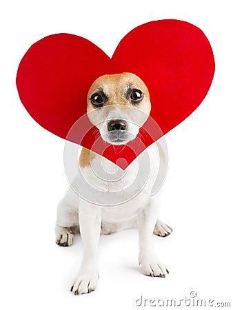 dog days heart relationship