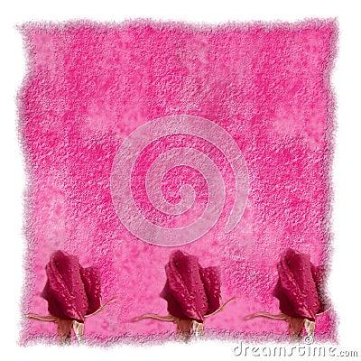 Romantic pink parchment