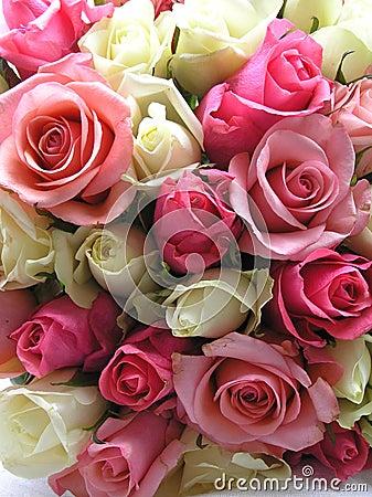 Free Romantic Roses Stock Photos - 214693