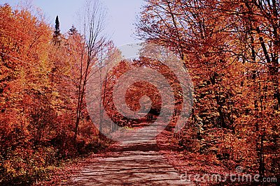 The romatic fall color road