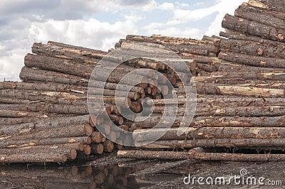 Rondins au moulin de bois de charpente