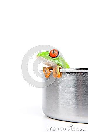 Rood-eyed boomkikker in het koken van pot