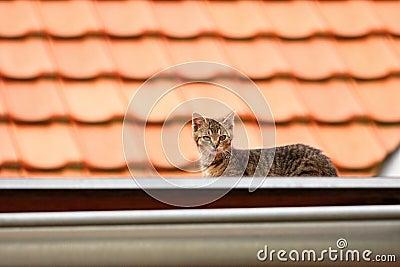 Roof kitten
