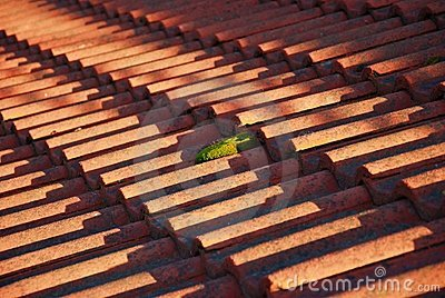 Roof and moss