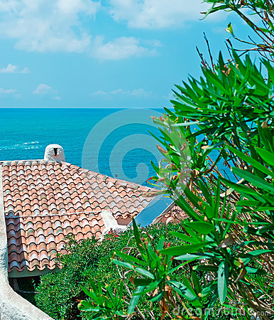 Roof and oleander