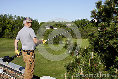 Roof top tree trimming