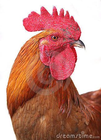 Free Rooster Stock Photo - 2696200