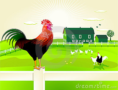 Rooster and farm
