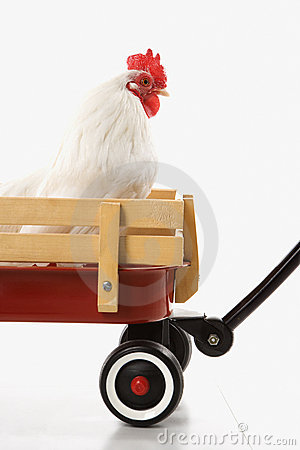Free Rooster In Red Wagon. Royalty Free Stock Image - 2051426