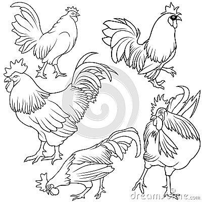 Rooster Set