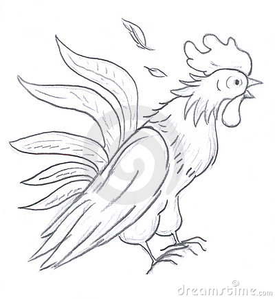 Rooster sketch