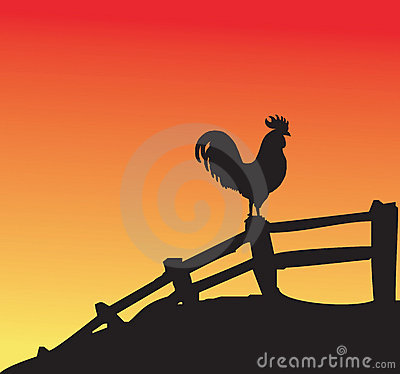 Rooster at sunset