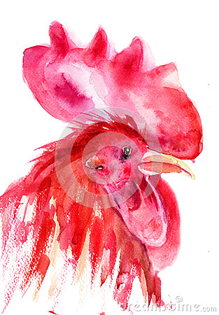 Rooster, watercolor illustration