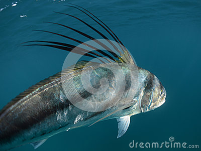 pacific ocean underwater  Royalty Free Stock Photography: