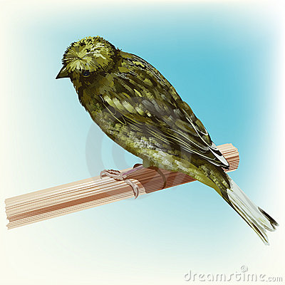 Roosting Green Canary Bird