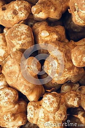 Root tuber