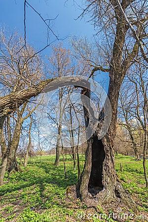 Roots of the broken tree.