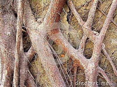 Roots Colour
