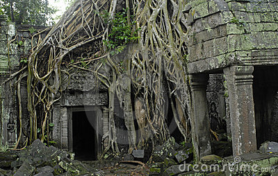 Roots of a silk cotton tree at Ta Prohm