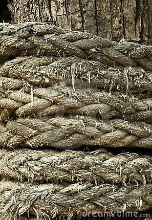 Free Rope Coiled Around Tree Royalty Free Stock Photography - 19864317