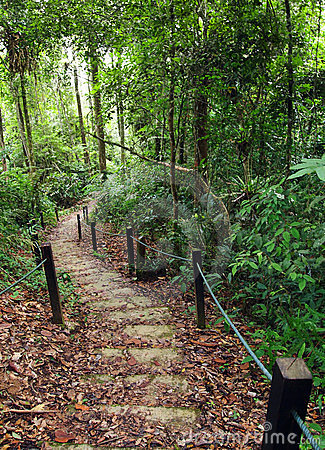 Roped jungle path for safe trekking in mountains