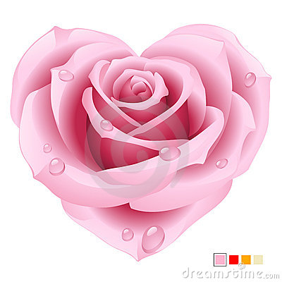 Rosa cor-de-rosa na forma do coração