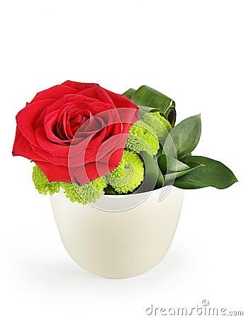 Rosa hermosa del rojo en un pote