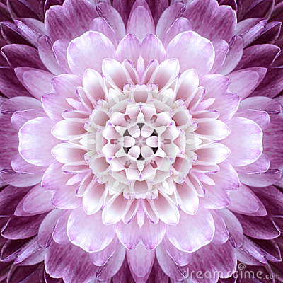 Rosa Kornblume Mandala Flower Kaleidoscope Isolated Auf Weiß ...