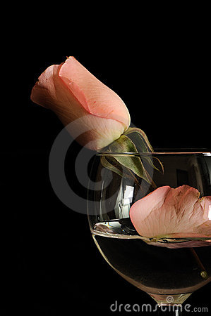 Rosa no vidro