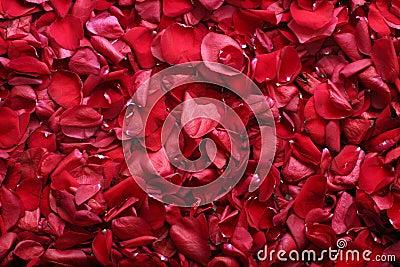 Rosa-petali