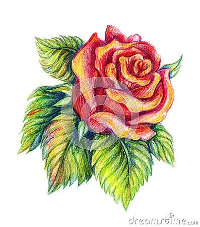 Rosa rossa disegnata a mano su fondo bianco fotografie for Disegni di fiori a matita