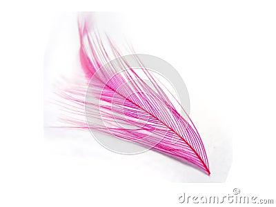 Rosafarbene Feder