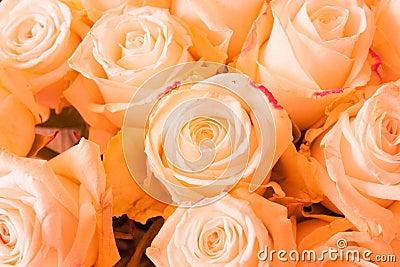 Rosas alaranjadas