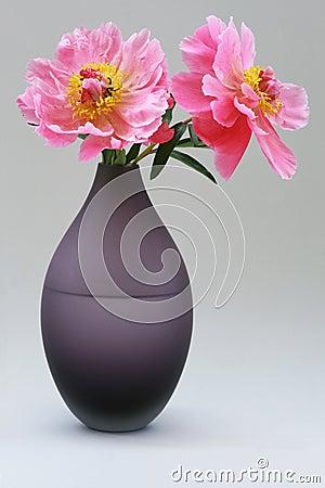 Rosas del Peony en el florero