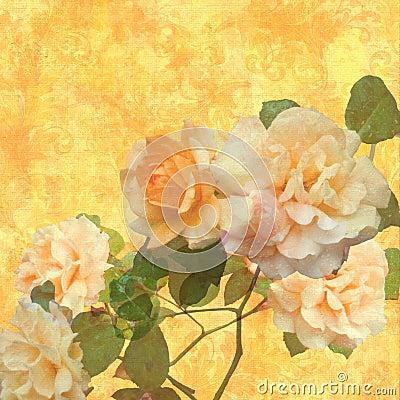 Rosas que brillan intensamente