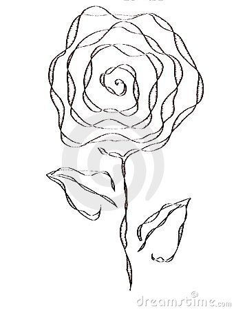 artistic isolated Rose