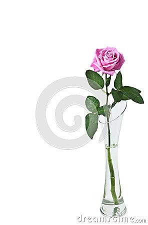 Free Rose Royalty Free Stock Image - 12315106