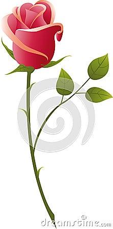 Free Rose Stock Image - 15425381