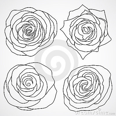 Roseroyalty Flowers on Rose Royalty Free Stock Images   Image  23851279