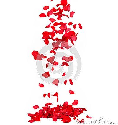 Free Rose Royalty Free Stock Photo - 30699925